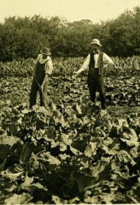 2 Shaker men in their garden courtesy Hamilton College Library Digital Collection